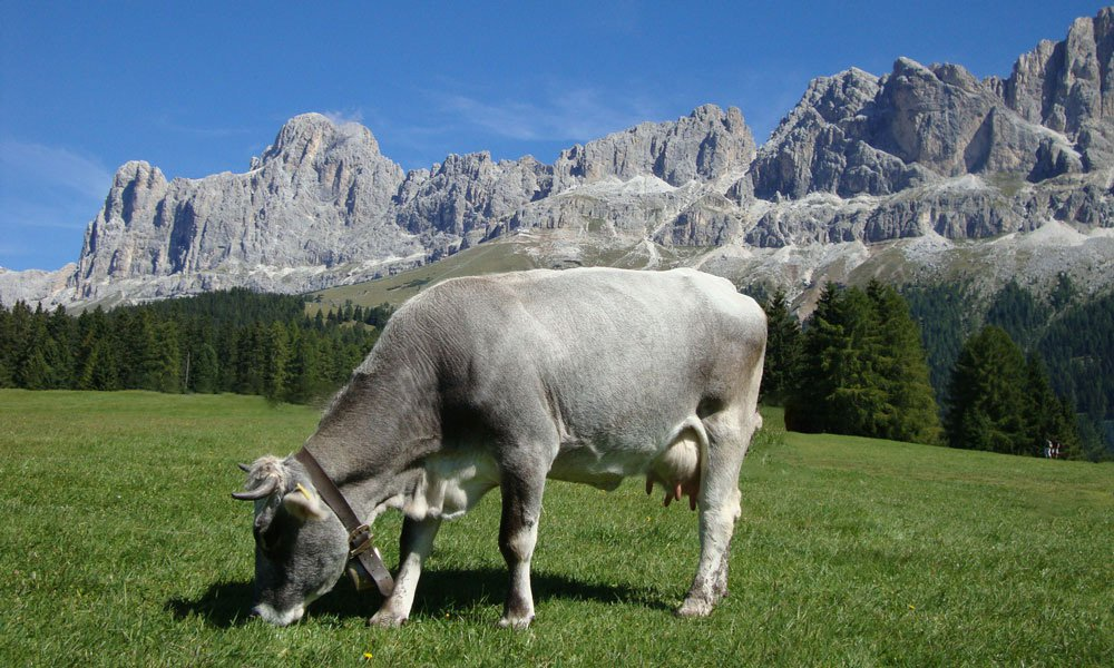 History and culture in the Dolomites